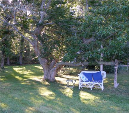 West Tisbury Martha's Vineyard vacation rental - Under the English Chestnut tree.
