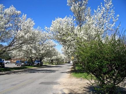 Vineyard Haven Martha's Vineyard vacation rental - Our Tree-Lined Lane