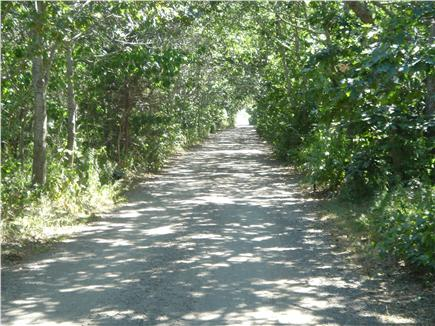 Katama - Edgartown, Edgartown Martha's Vineyard vacation rental - Bike or stroll down our peaceful, tree lined street to the water