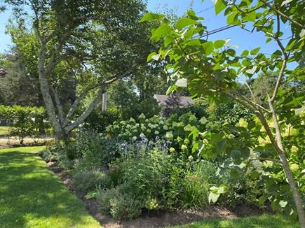 Oak Bluffs Martha's Vineyard vacation rental - Front garden in side yard
