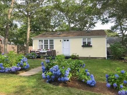 Vineyard Haven Martha's Vineyard vacation rental - Martha's Vineyard Rental Exterior: Hydrangea in Bloom! New Paint!