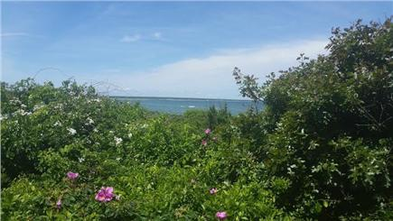 Edgartown Martha's Vineyard vacation rental - View from the short path from the parking area to the beach