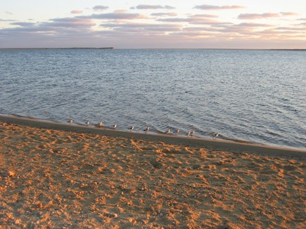 West Tisbury Martha's Vineyard vacation rental - Walk to Sepiessa Point~Just down the road from my house!