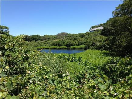 Chilmark Martha's Vineyard vacation rental - View from the road, across the pond to the house