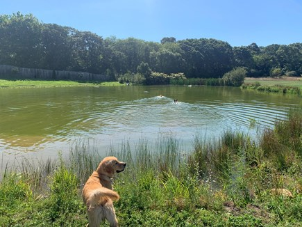 Oak Bluffs Martha's Vineyard vacation rental - Pond right in your backyard.