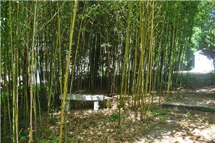 West Tisbury Martha's Vineyard vacation rental - Bamboo Meditation Area--Stone Bench