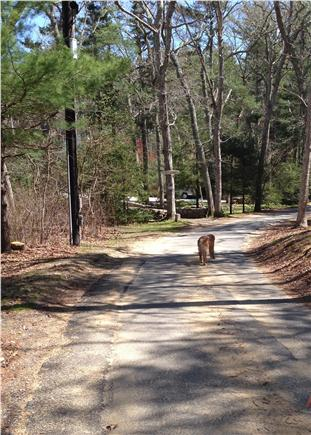 West Tisbury Martha's Vineyard vacation rental - A pretty, five-minute walk to the pond along this road