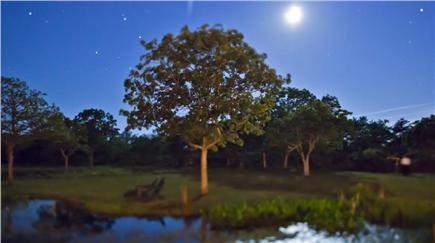 Edgartown Martha's Vineyard vacation rental - Goldfish pond at night.