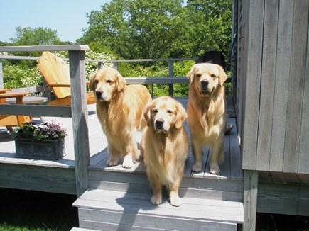 Chilmark Martha's Vineyard vacation rental - Handsome cottage guests