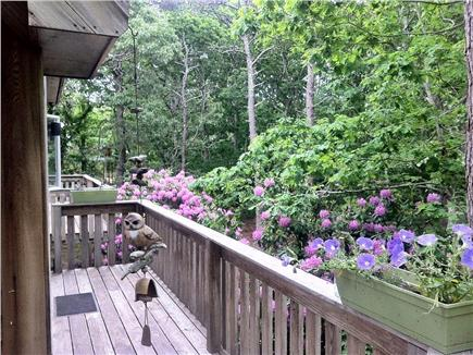 Edgartown Martha's Vineyard vacation rental - Front yard view from porch