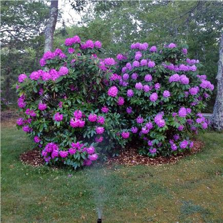 Vineyard Haven Martha's Vineyard vacation rental - Relax in a quiet peaceful setting with many flower beds to enjoy.
