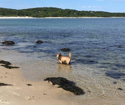 West Tisbury Martha's Vineyard vacation rental - Lambert's Cove Beach