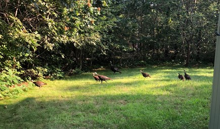 Katama - Edgartown, Edgartown Martha's Vineyard vacation rental - Backyard guests!