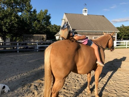 West Tisbury Martha's Vineyard vacation rental - This home is on a working horse farm, riding can be arranged
