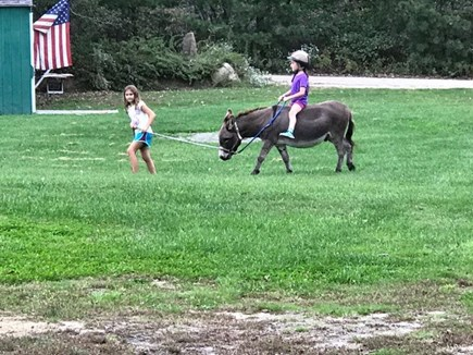 West Tisbury Martha's Vineyard vacation rental - Enjoy a ride on a pony