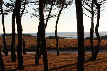 Chappaquiddick Martha's Vineyard vacation rental - Short walk to nature preserve.