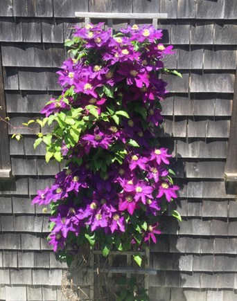 Edgartown Martha's Vineyard vacation rental - Flowers and gardens for your enjoyment