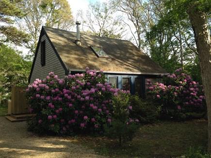 Oak Bluffs Martha's Vineyard vacation rental - Charming East Chop 3 bedroom Cape