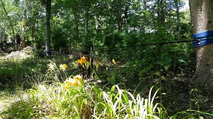 Oak Bluffs, Vineyard Haven Martha's Vineyard vacation rental - Summer