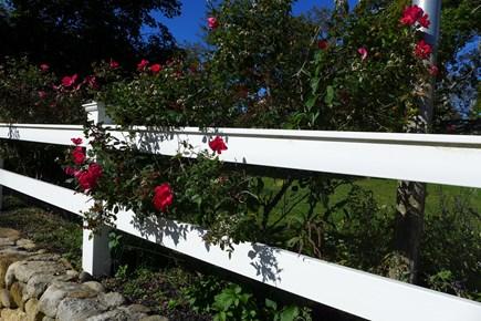 Oak Bluffs Martha's Vineyard vacation rental - Beautifully landscaped