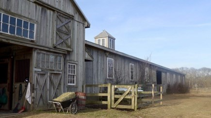 West Tisbury Martha's Vineyard vacation rental - Martha's Vineyard premiere dressage experience, farm and cottage.