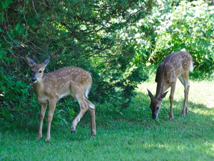 oak bluffs Martha's Vineyard vacation rental - Some friends that might pass through in the morning.
