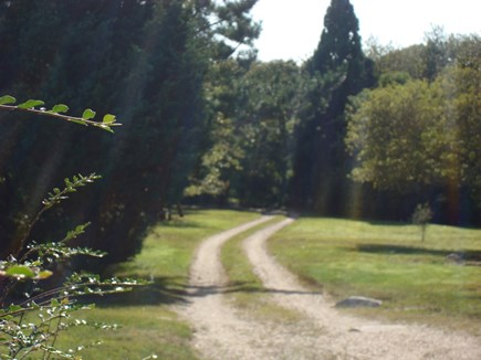 Chilmark Martha's Vineyard vacation rental - The view down our driveway.