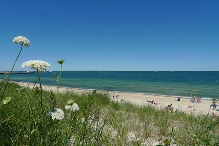 Oak Bluffs Martha's Vineyard vacation rental - Sunbathing, swimming and snorkeling at Inkwell Beach