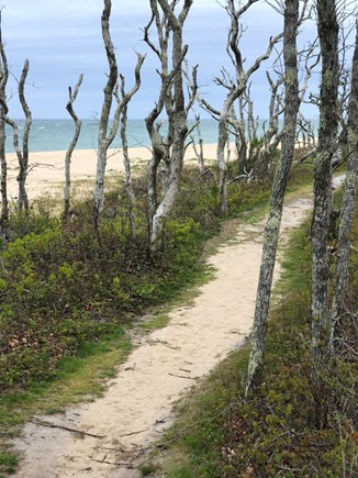 Chappaquiddick Martha's Vineyard vacation rental - Tons of walking paths throughout the island