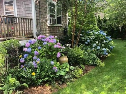 Oak Bluffs Martha's Vineyard vacation rental - Landscaping view