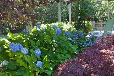 Katama - Edgartown, Edgartown Martha's Vineyard vacation rental - Flowers concealing side deck