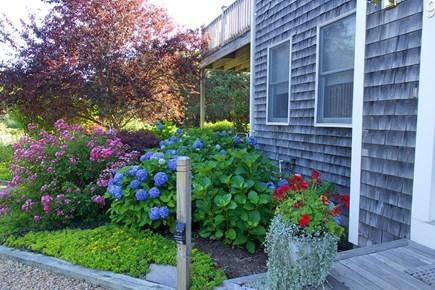 Katama - Edgartown, Edgartown Martha's Vineyard vacation rental - Landscaping at front entrance