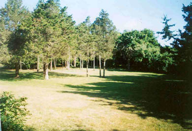 Edgartown Martha's Vineyard vacation rental - Front Yard, trees screen house from quiet road
