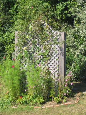 Edgartown Martha's Vineyard vacation rental - A flowery private outdoor shower just steps away!