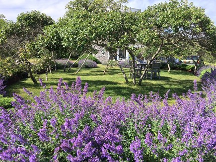 Tom Nevers Nantucket vacation rental - Circular garden makes a lovely spot for a picnic