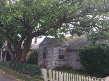 Siasconset Nantucket vacation rental - Fenced backyard with beautiful mulberry tree.