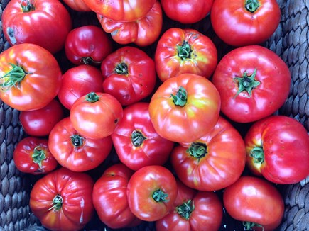 Tom Nevers, Nantucket Nantucket vacation rental - We love to share our garden bounty.