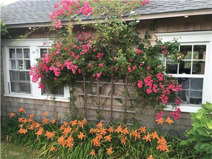 Siasconset, Nantucket Nantucket vacation rental - Rosy cottage in full bloom