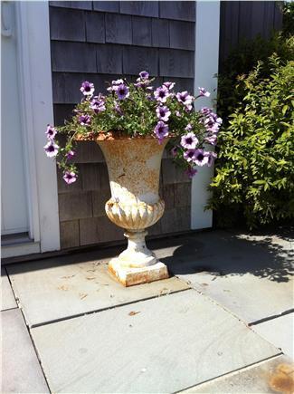 Pocomo Nantucket vacation rental - Good idea to plant those super-tunias. Come see for yourself!