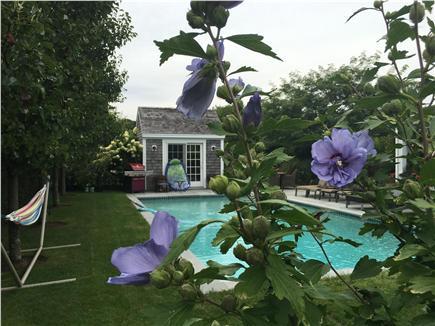 Pocomo Nantucket vacation rental - Ooh-la-la, the pool!