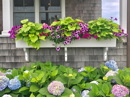 Brant Point, Nantucket Nantucket vacation rental - Charming Nantucket windowboxes!