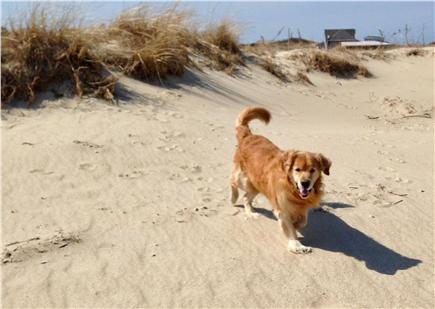 Siasconset Nantucket vacation rental - Yes, our dog is welcome, and so is yours.