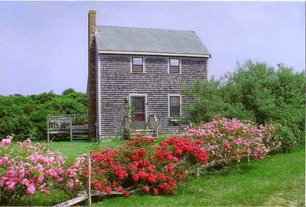 Mid-island Nantucket vacation rental - Nantucket Saltbox: roses are at their best in late June and July