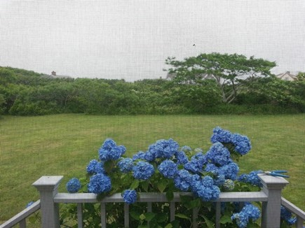 Wauwinet Nantucket vacation rental - Surrounded by nature.
