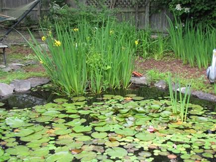 Nantucket town, Nantucket Nantucket vacation rental - Fish pond