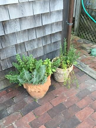 Nantucket town, Nantucket Nantucket vacation rental - Herbs