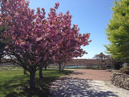 Madequecham Nantucket vacation rental - Cherry trees,stone wall, shell driveway with brick turnaround