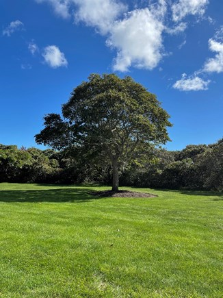 Tom Nevers Nantucket vacation rental - The expansive yard is perfect for games and stargazing.