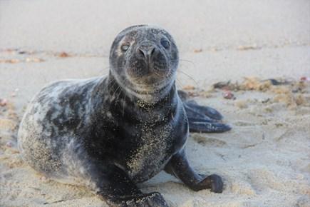 Nantucket town, Town Center Nantucket vacation rental - Seal friend