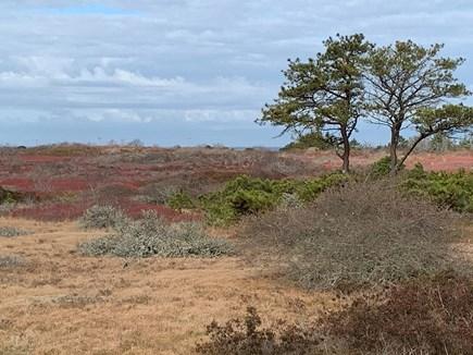 Madaket, Fishers Landing Nantucket vacation rental - Abuts 500 acres of conservation land.